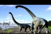 New species of dinosaur found in Australia