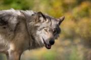 How Evolution Creates Hybrid Animals